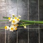 春が近づいてきた(*´▽`*)